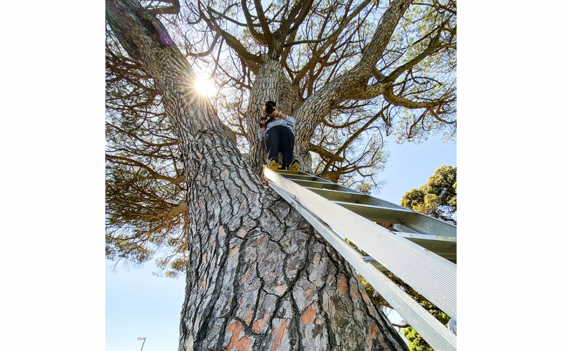 Jessica Zumpfe standing in a tree on a photoshoot for Tchibo active in Cape Town